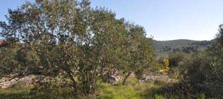 Čiovo, Okrug Donji, building land plot for sale